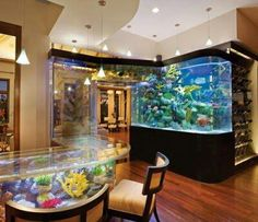 Fantastic aquarium! If u look closely it is all connected so the fish can go from 1 place to the other..fantastic idea