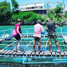 Exploring #sealife at #seafdec in #Guimaras. #conservation #fish #itsmorefuninthephilippines #iamiloilo #ilovephilippines #photography #travel :tropical_fish::fish::heart::earth_americas::camera: