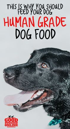 This is Why You Should Feed Your Dog Human Grade Dog Food. What is human grade dog food and is it good for your pup? Check out this dog food information here. Best Dog Food, Dry Dog Food, Human Grade Dog Food, Food Grade, Grain Free Dog Food, Dog Nutrition, Group Of Dogs, Can Dogs Eat, Large Dog Breeds
