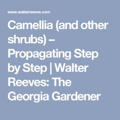 Camellia (and other shrubs) – Propagating Step by Step   Walter Reeves: The Georgia Gardener