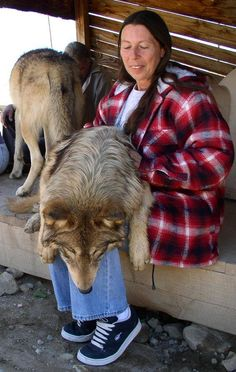 Much like dogs, wolves are also able to transform to the Big Fluffy Bag of Fluffiness mode.
