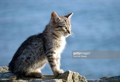 This kitten was born on the port waterfront. He spend the day there in the sun. The neighbours feed him.