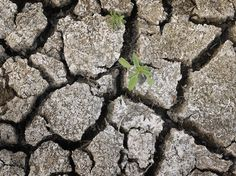 NPR: Drought In U.S. Now Worst Since 1956; Food Prices To Spike, Economy To Suffer - http://www.npr.org/blogs/thetwo-way/2012/07/17/156894107/drought-in-u-s-now-worst-since-1956-food-prices-to-spike-economy-to-suffer?ft=3=1001=nl=pmb-20120717#