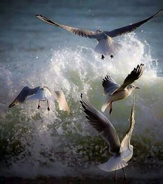 God's creation enjoying the scenery Beautiful Birds, Animals Beautiful, Animal Photography, Nature Photography, Seagulls Flying, Shorebirds, Tier Fotos, Sea Birds, Ocean Waves
