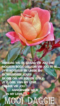 October in the rose garden