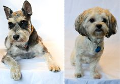 Make a tea towel with your dog's picture on it :D