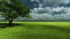 Thả hồn mình theo những làn gió du dương trên cánh đồng cỏ xanh mênh mông bát ngát với tải hình ảnh đẹp về thiên nhiên 3d – Đồng xanh mênh mông để tận hưởng cảm giác thoải mái nhất nhé!
