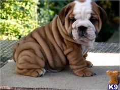 wrinkles in all their greatness