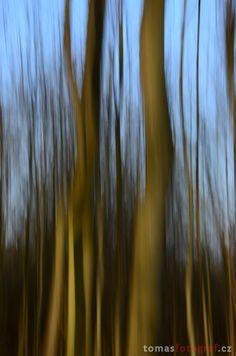 Wood not in focus