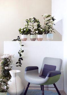 Schlichte Farbakzente zu weißen Blüten – Pflanzenfreude.de