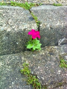 Be like that flower grow through anything