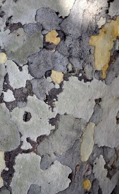 color palette-- close-up of Sycamore tree bark Tree Patterns, Patterns In Nature, Textures Patterns, London Plane Tree, Nature Artists, Colour Pallete, Elements Of Design, Tree Bark, Photo Tree