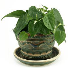 5 Hard-to-Kill Houseplants: Philodendron Feng Shui, Inside House Plants, Household Plants, Decoration Plante, Low Light Plants, House Plant Care, Cast Iron Plant, Spider Plants, Bathroom Plants