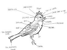 Topography of a bird.