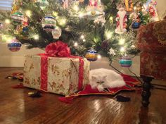 Gianni under the Christmas Tree!