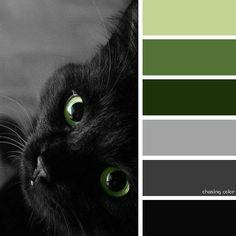 20 ideas for eye shadow palette photography shades Black Color Palette, Colour Pallette, Color Combos, Color Schemes, Black Photography, Cat Colors, Design Seeds, Color Studies, Colour Board