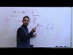 Immunology (Neutrophil) Lecture 3 Part 9