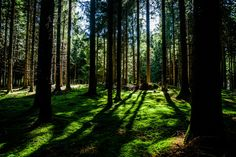 Maina Servadzo a La Magdeleine: Vacanze in famiglia con Forest Bathing Cells Activity, Psychological Effects, Forest Bathing, Nature Sounds, Traumatic Brain Injury, Depression Treatment, Plantar, Mindfulness Meditation, Samsung Galaxy S3