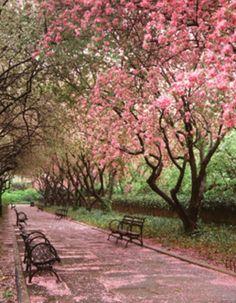 Photo: Sara Cedar Miller/Central Park Conservancy