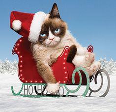 Grumpy Cat's Worst Christmas Ever on Lifetime #WorstChristmasEver World Premiere November 29 at 8/7c