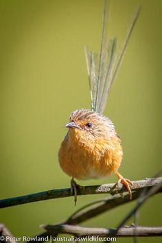 Birds, Animals, Color, Animales, Animaux, Colour, Bird, Animal, Animais