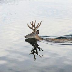 prongs swimming