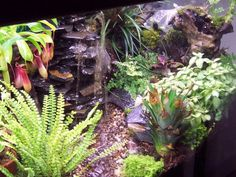 We have a 55 gallon fish tank that leaks in spite of our efforts to seal it over and over again. We are thinking of making a terrarium. Hmmm.