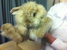 It's So Fluffy I'm Gonna DIEEE! | Cutest Paw