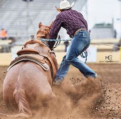 35 Best Roping Horses images in 2018 | Cowboy, cowgirl