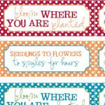 Seed packets & printables - lots of styles to choose from