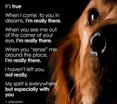 I feel you Jack dog! #DogQuotes