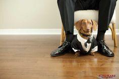 wiener dog at wedding - Google Search