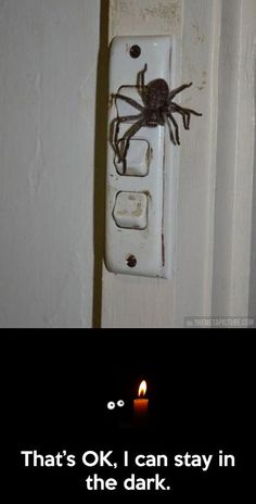 How can you see where the spider is in the dark though? Haha guess you'd have to reach for the light switch and touch the spider. Lets all think about that next time we flip a light switch in the dark Funny Quotes, Funny Memes, Jokes, Frases Humor, Humor Grafico, Funny Pins, Funny Stuff, Scary Stuff, Stupid Stuff