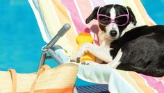 Tips for Creating a Pet Friendly Patio & Backyard | PatioFurniture.com/Outdoor-Living #outdoorliving #petfriendlypatio #patiofurniture