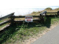 Beware of Bees Bees, Canada