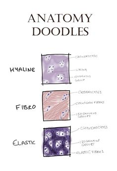 Oodles of histology doodles by anatomydoodles