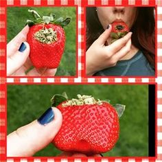 This strawberry shortbowl: | 24 Things That Prove Stoners Are The Most Creative People In The World