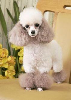 スウィート・ブレス --愛犬の友 ヘアスタイルカタログ--