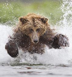 Las mejores fotos de animales y vida salvaje de 2014 | Tele 13