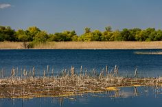 Danube Delta, Famous Castles, Wonderful Places, Painting Inspiration, Places To See, Seaside, Scenery, Wildlife, Meet