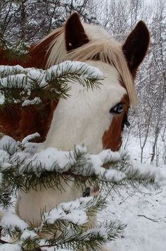 horse in the snow...now that's a beautiful face!