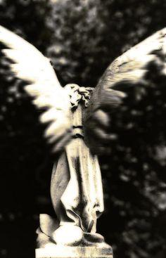 Flutter, ISuchocki