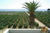 Agriturismo Marsala - Sicilia - Agriturismo Masseria Baglio Tenute Montalto