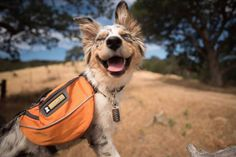 A Checklist for Camping With Your Dog Dogs love to explore new grounds and relax with their owners. To ensure you have a wonderful camping experience with your furry friend, it's best that you plan ahead.
