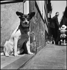 hollybailey: Paris, 1949 by Elliott Erwitt History Of Photography, Animal Photography, Street Photography, Famous Photographers, Documentary Photographers, Eliot Erwitt, Elliott Erwitt Photography, Black N White Images, Black And White