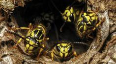 7 Ways to Keep Bees Off Your Hummingbird Feeders! - Bird Watching HQ Keep Bees Away, Butterfly Species, How To Attract Hummingbirds, Humming Bird Feeders, Bee Keeping, Bird Watching, Dream Garden