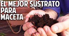 Hoy vamos a ver como preparar un sustrato completo ideal para macetas, mesas de cultivo o macetohuertos. Te voy a contar cuales son las propiedades de un suelo ideal y que nutrientes es fundamental incorporar para que nuestras plantas crezcan sanas y fuertes.