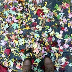 Quick Trip to Chicago Fall Leaves, Houseplants, Container Gardening, Chicago, Around The Worlds, Trees, Colorful, City, Autumn Leaves