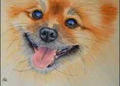 Learn to paint this laughing Pomeranian dog in watercolor! Click the link to the website for a free tutorial! Watercolor Video, Watercolour Tutorials, Watercolor Techniques, Painting Techniques, Watercolor Paintings, Watercolors, Painting Videos, Painting & Drawing, Animals Watercolor