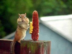 Oops, was that corn yours ? I ate it